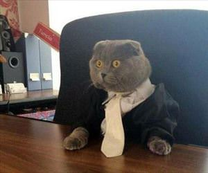 this cat means business