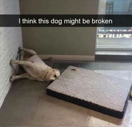 this-dog-is-broken_th.jpg