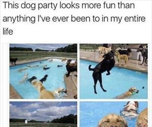this dog party looks fun