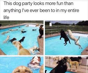 this dog party