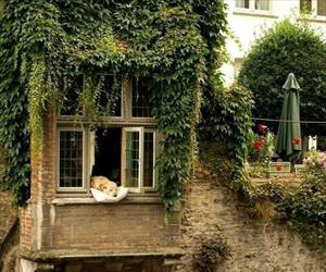 this doggo is living the good life