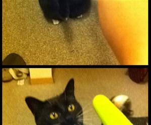 this cat loves popsicles funny picture