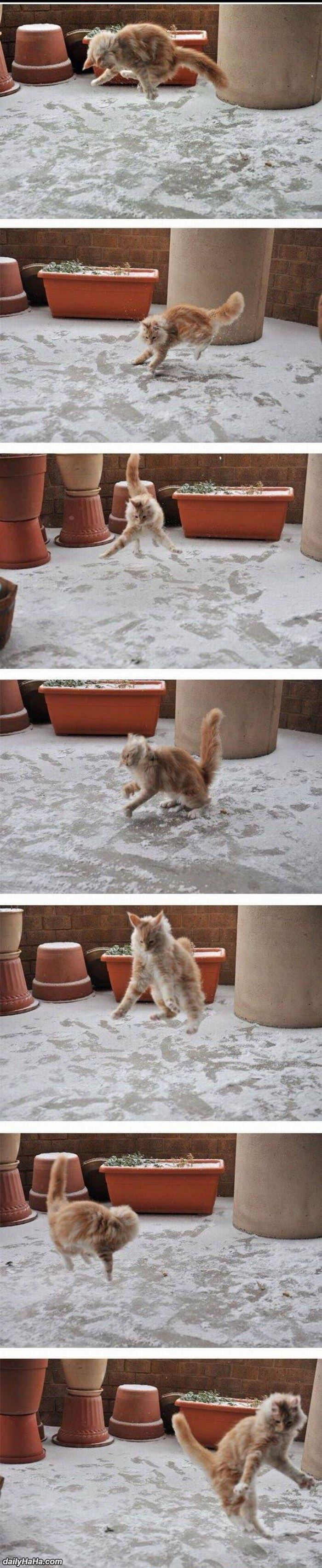 this cat playing in the snow funny picture