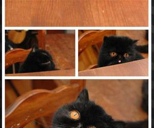 this cats eyes funny picture