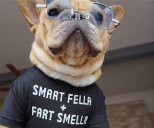 this dog is a smart fella funny picture