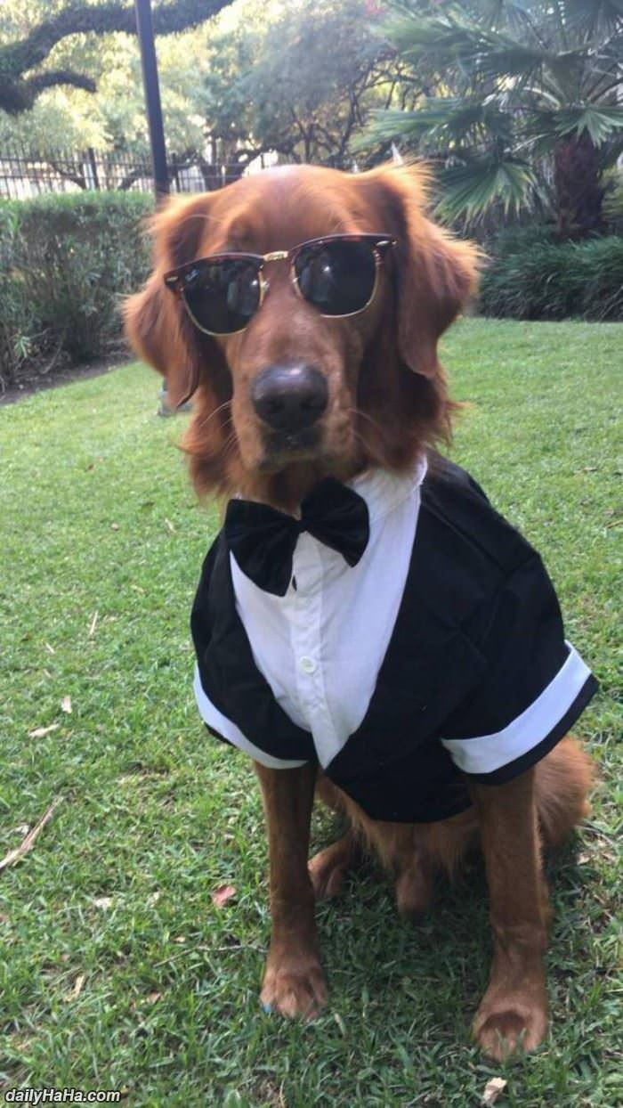 this dog is ready for any occasion funny picture