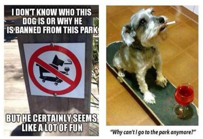 this dog loves the park funny picture