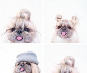this dogs hair funny picture