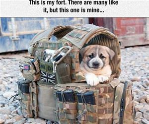 this is my fort funny picture