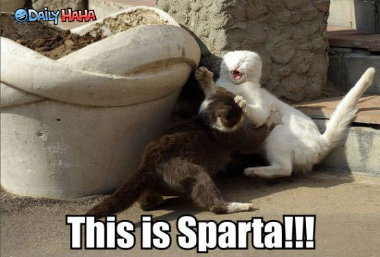 This_is_Sparta_Cats