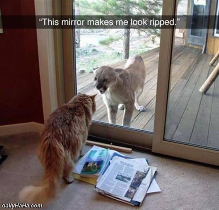 this mirror is great funny picture