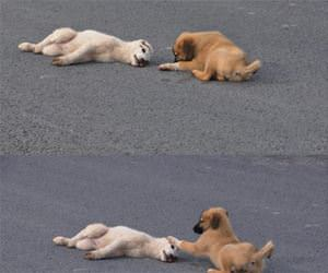 this puppy funny picture