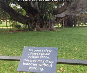 this tree does not mess around funny picture