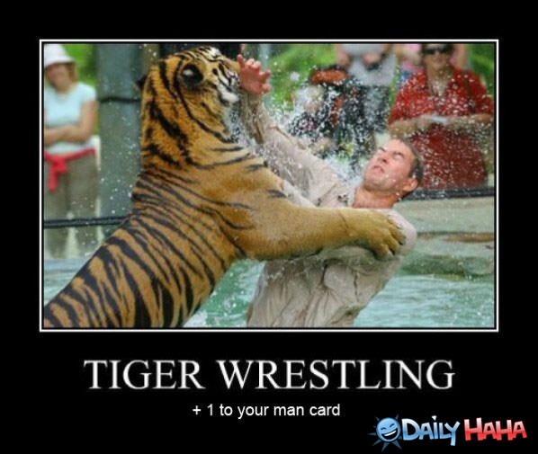 Tiger Wrestling funny picture