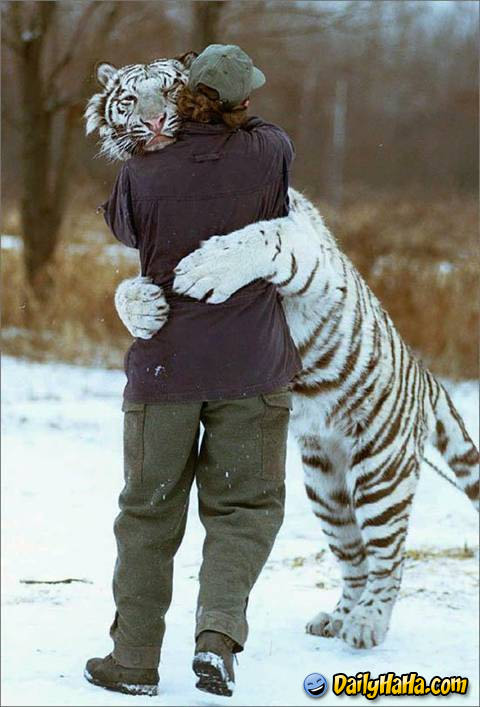 Man Hugging Tiger, Tiger getting hungry! Category: animals