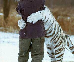 Man Hugging Tiger, Tiger getting hungry!