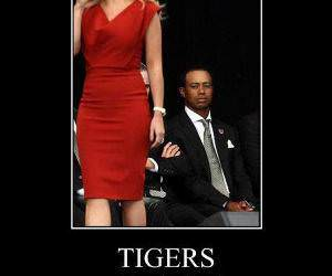 Tigers funny picture