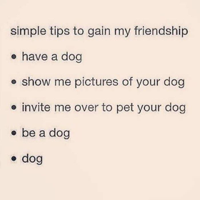 tips to gain my friendship funny picture