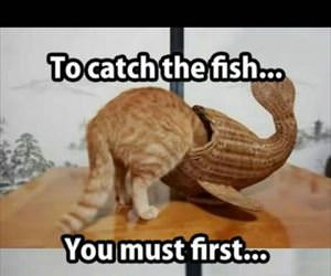 to catch a fish