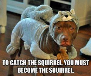 To Catch the Squirrel funny picture