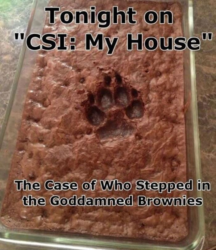tonight on csi funny picture