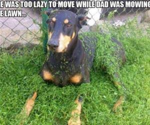 too lazy to move funny picture