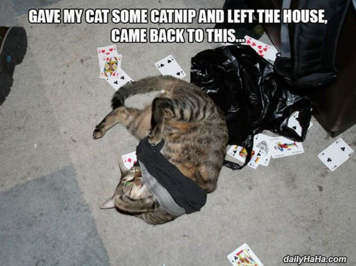 too much nip funny picture