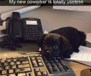 totally-useless-co-worker funny picture