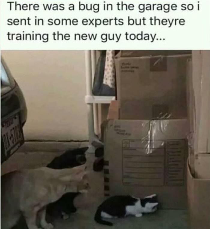 training the new guy