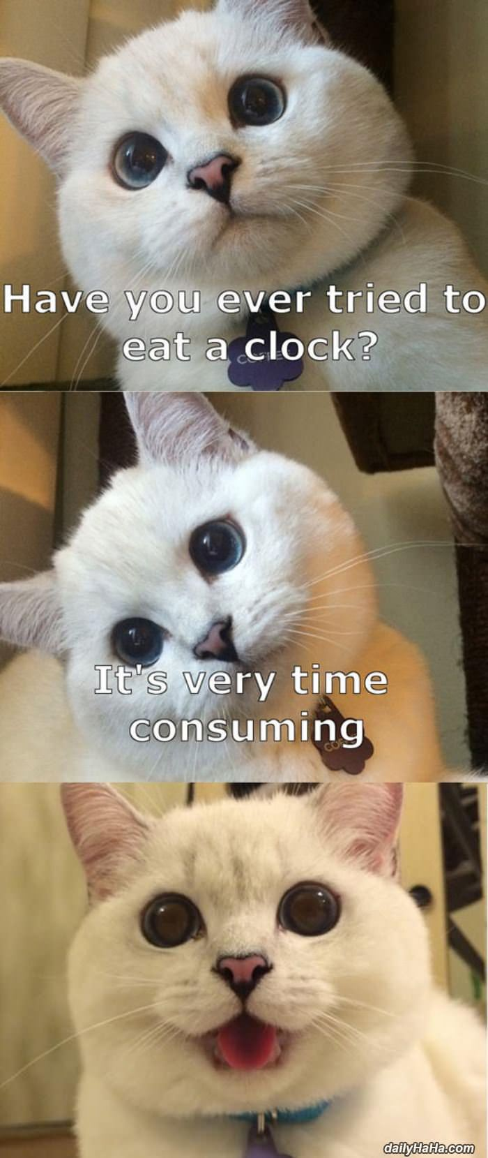 tried to eat a clock funny picture