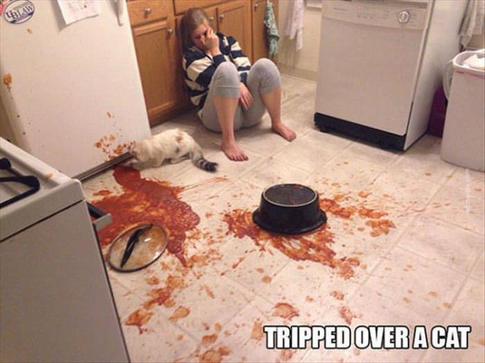 tripped over the cat funny picture