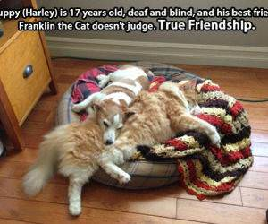 True Animal Friendships funny picture
