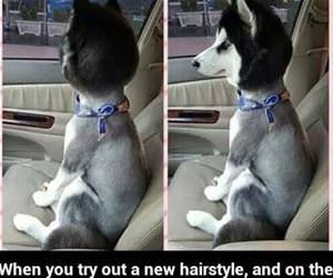 trying a new hairstyle funny picture