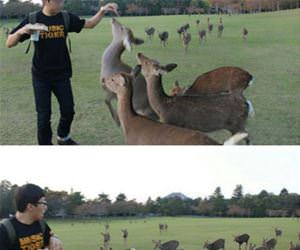 trying to feed some deer funny picture