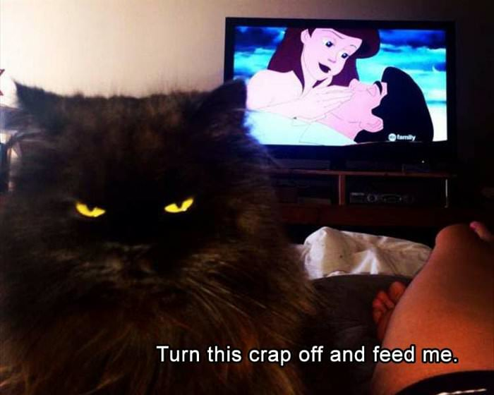 turn this off and feed me