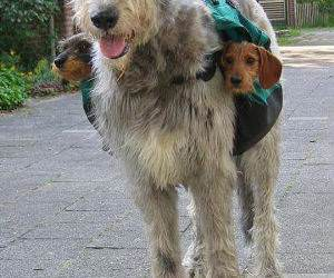 two sub woofers funny picture