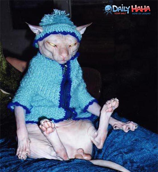 Ugliest Cat Ever