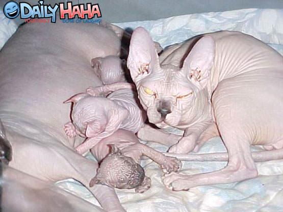 http://www.dailyhaha.com/_pics/ugliest_dog_family.jpg