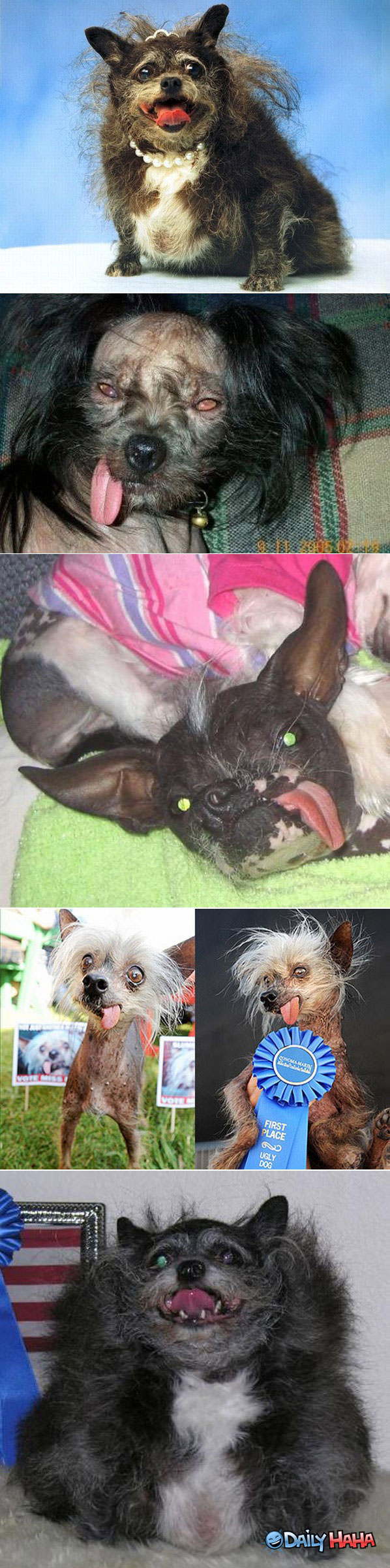 Ugly Dogs funny picture