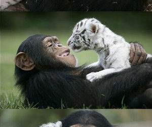 Unlikely Friends funny picture