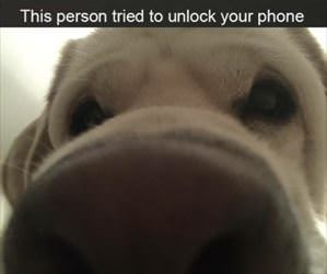 unlocked your phone
