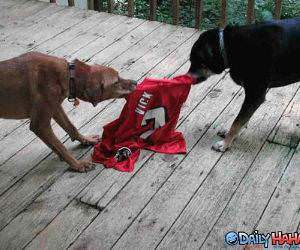 Vick Jersey Tug of War