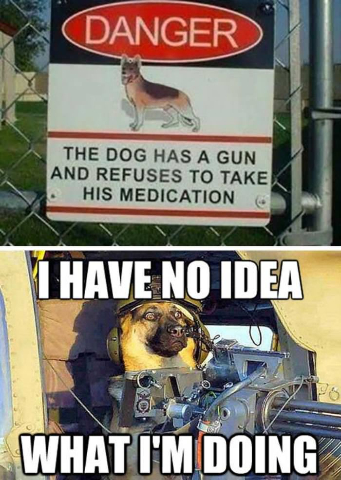 warning about the dog funny picture