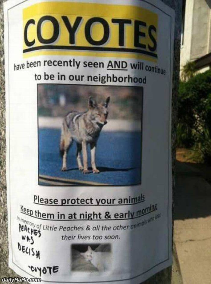 watch for coyotes funny picture