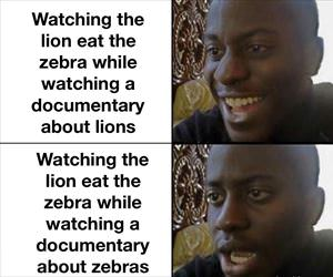 watchign the lion