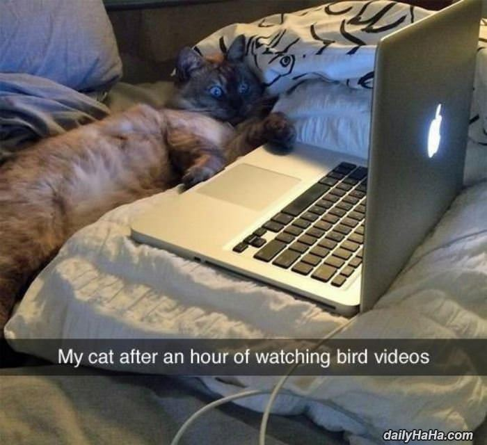 watching bird videos this is my cats face after an hour of watching