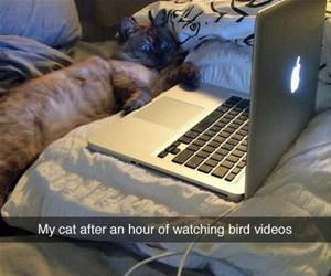 watching bird videos funny picture