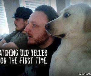 watching old yeller funny picture