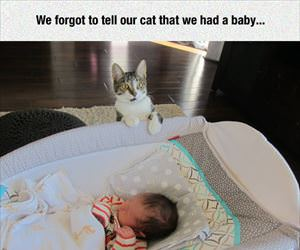 we forgot to tell the cat about the new baby