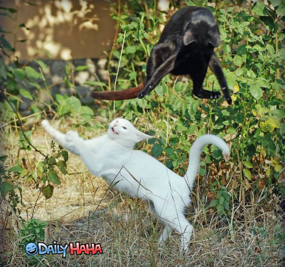 weird cat fight funny pictures cat fight 589x552